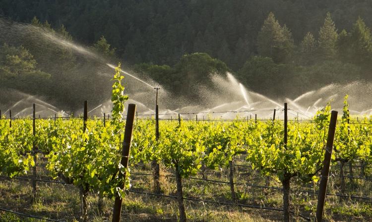 vineyard-irrigation