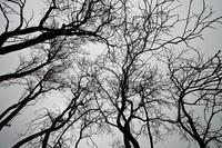 deadtrees-sm
