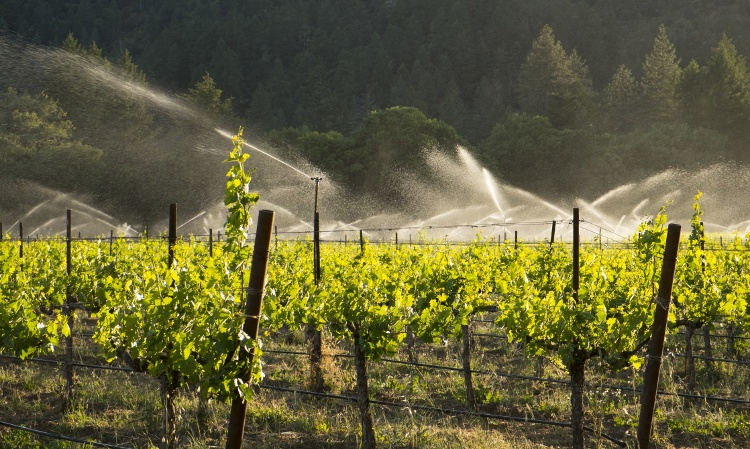 vineyard-irrigation
